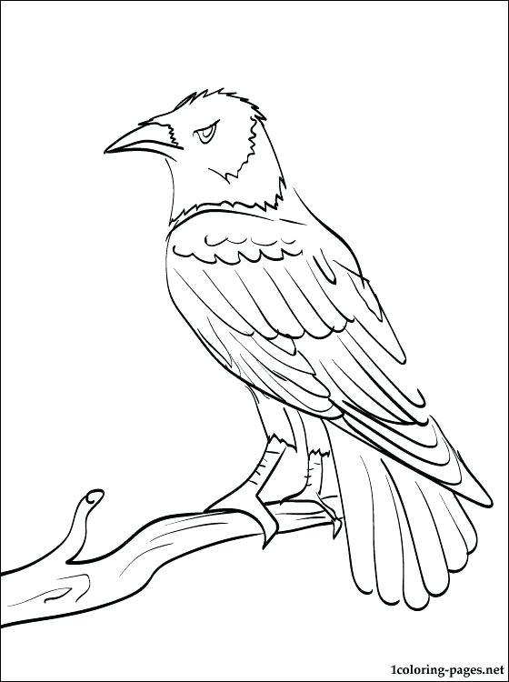 560x750 Baltimore Orioles Coloring Pages State Symbols Coloring Page Free