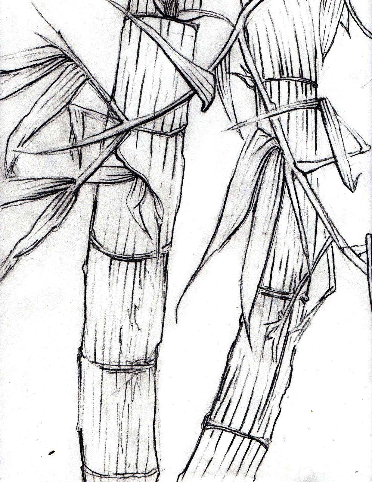 1236x1600 Bamboo Grove Photo Bamboo Drawing