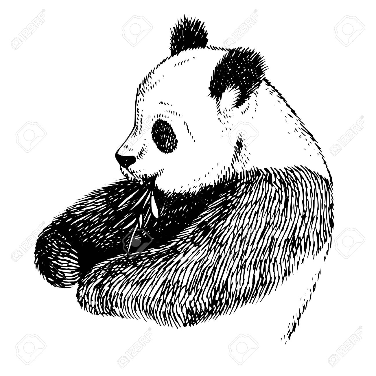1300x1300 Sketch Panda With Bamboo. Engrave Ink Draw Panda Illustration