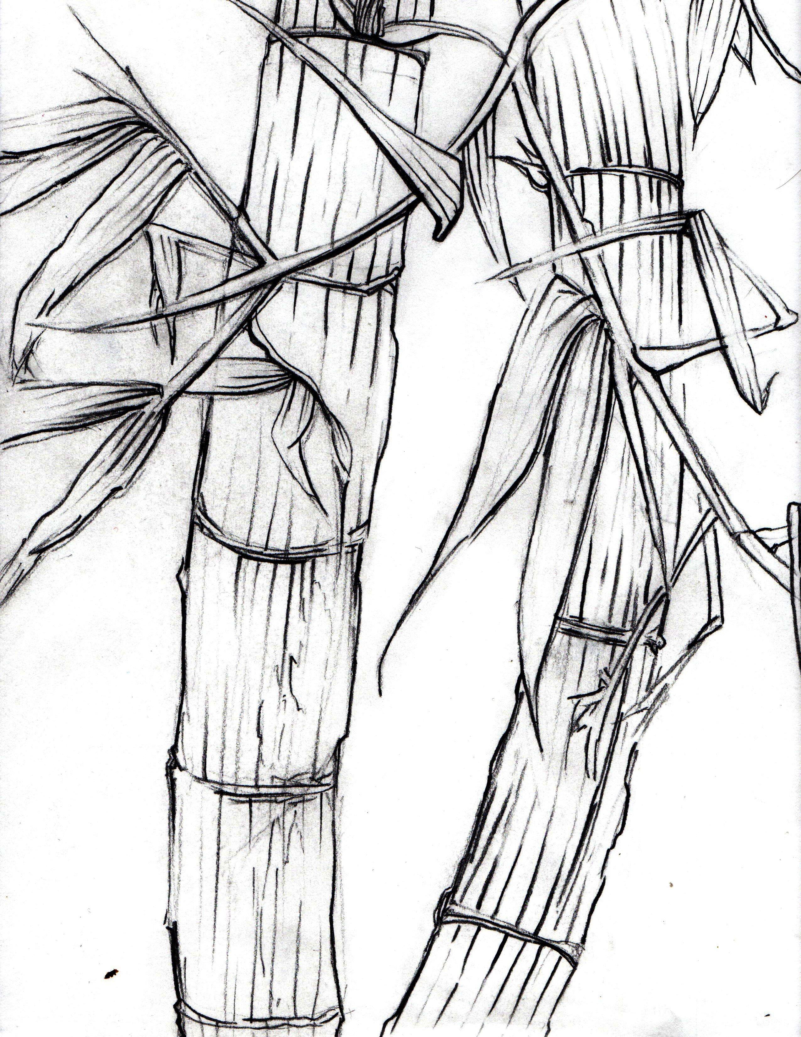 2550x3300 Bamboo (Contour Line Drawing) Jesse Talks