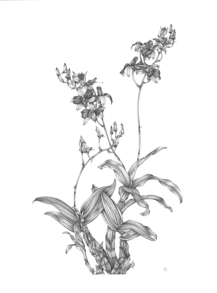 700x946 Bamboo Orchid Penny Jane Brown