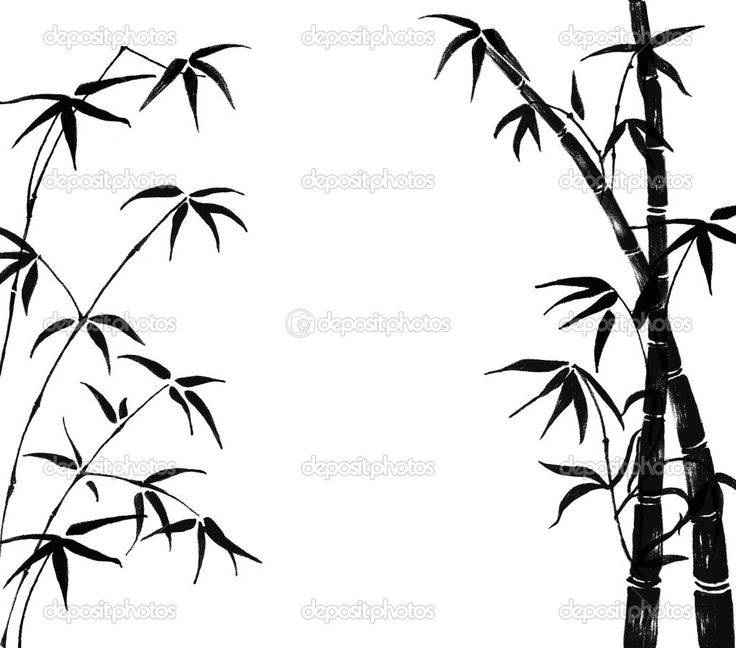 Bamboo Tree Drawing