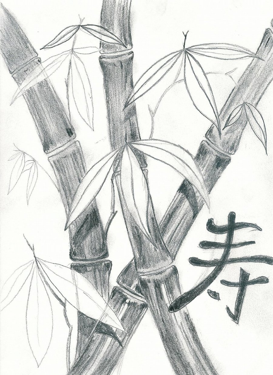 900x1237 Bamboo Sketch By Dragovich