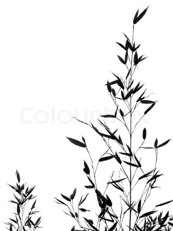 600x800 Bamboo Tree And Leaves Stock Photo Colourbox