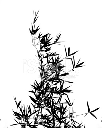 352x440 Bamboo Tree And Leaves In Outline Stock Photos