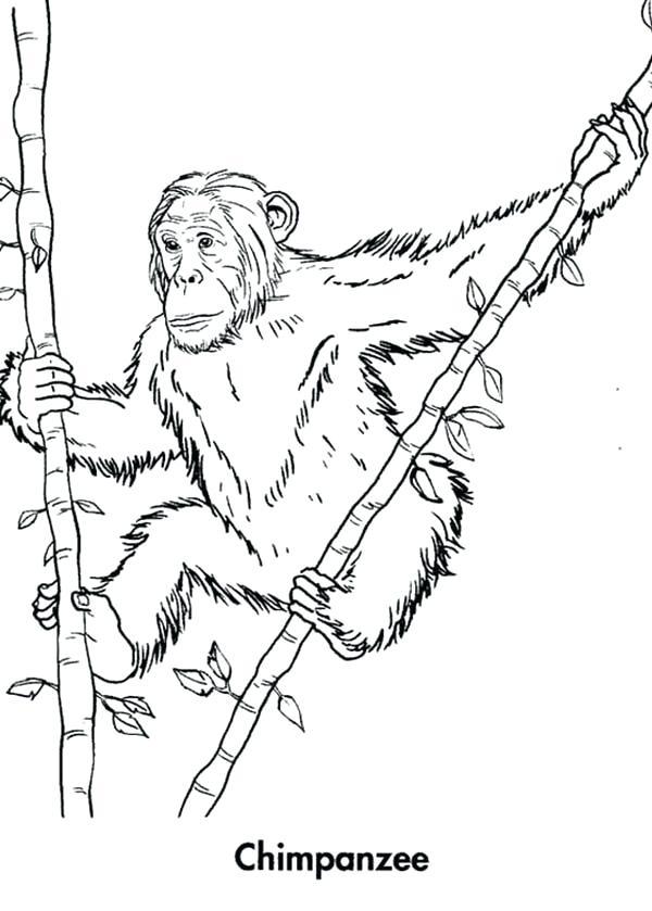 Bamboo Tree Drawing at GetDrawings