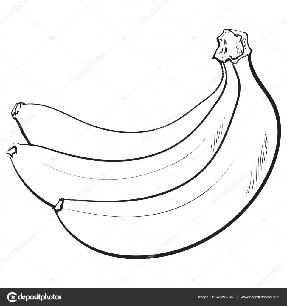 963x1024 Bunch Of Three Unopened, Unpeeled Ripe Bananas, Sketch Vector