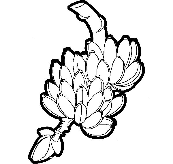 600x569 Harvest Banana Bunch Coloring Pages