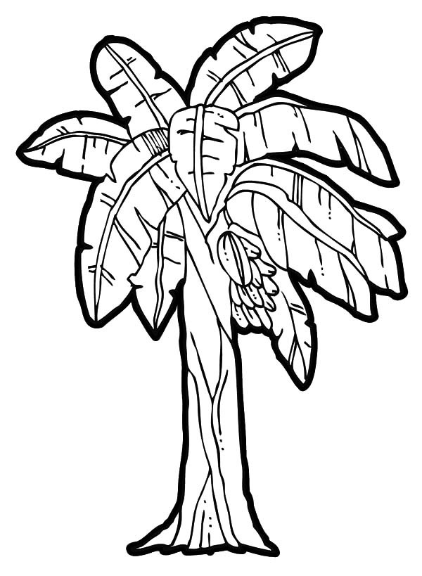 600x819 Banana Tree Coloring Page Coloring Page For Kids