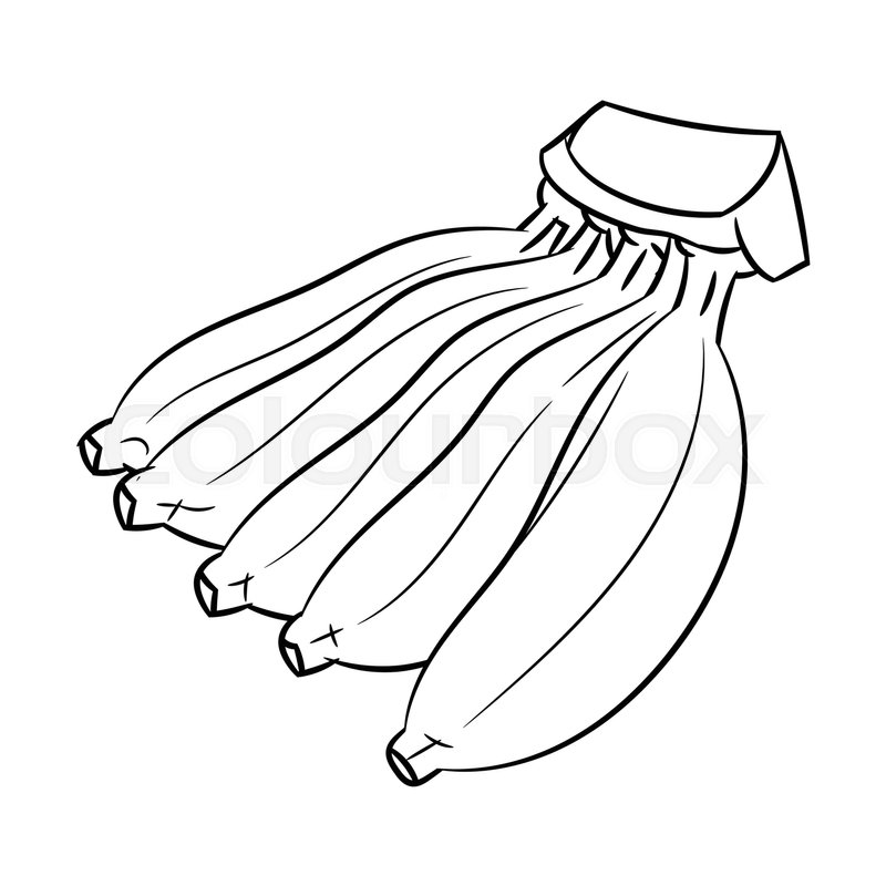 800x800 Hand Drawn Sketch Of Cultivated Banana Isolated, Black And White