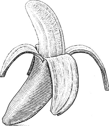 382x442 Amazon's Latest Market Disruption 1.7 Million Free Bananas