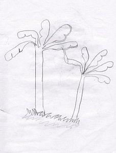 227x300 Banana Trees Drawings Fine Art America