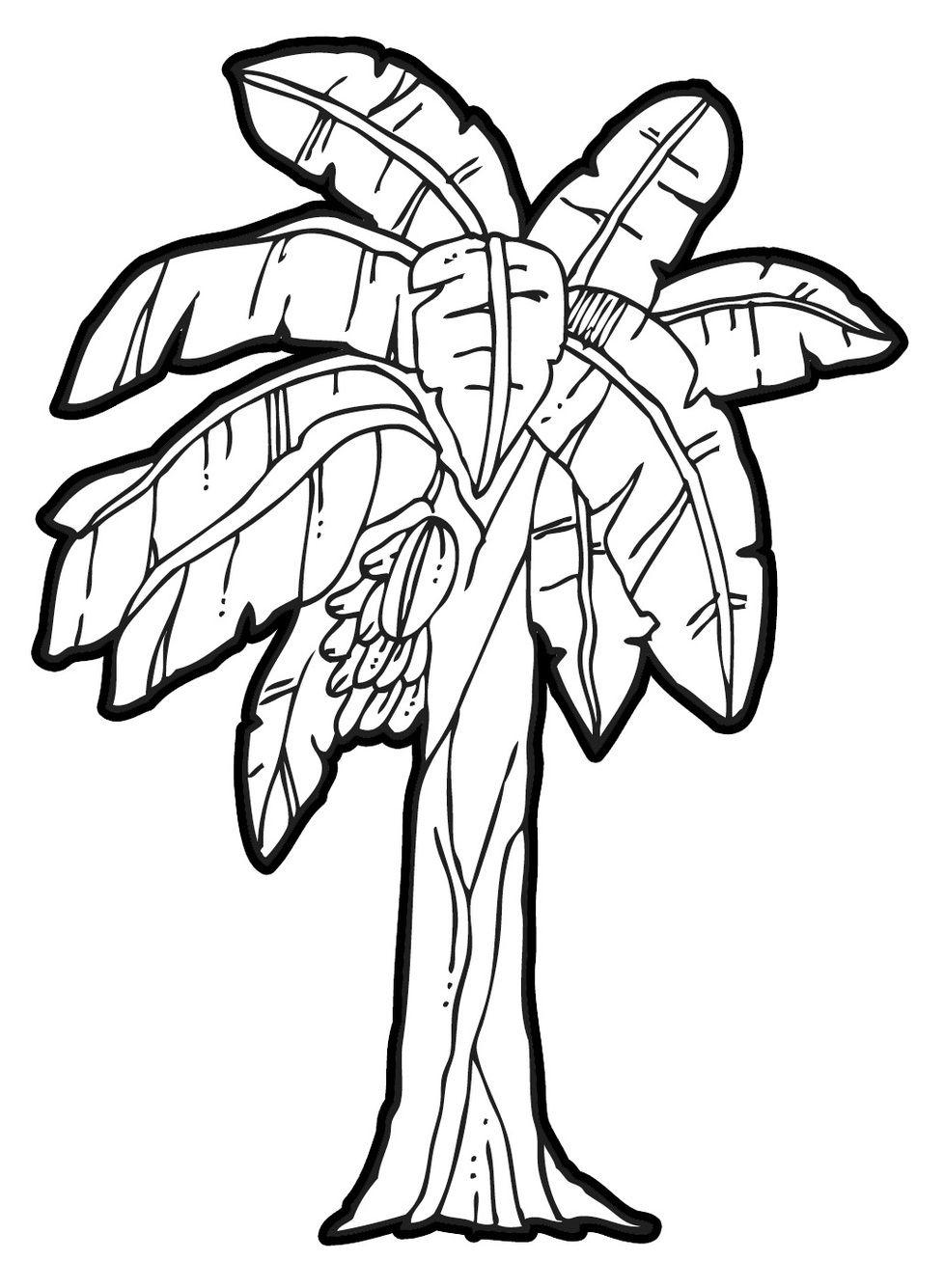 978x1335 Drawing Of Banana Tree Banana Tree Coloring Page