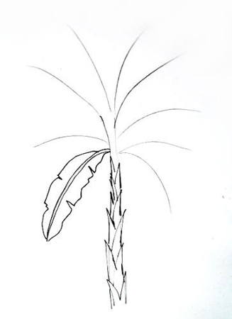 327x450 How To Draw A Banana Plant