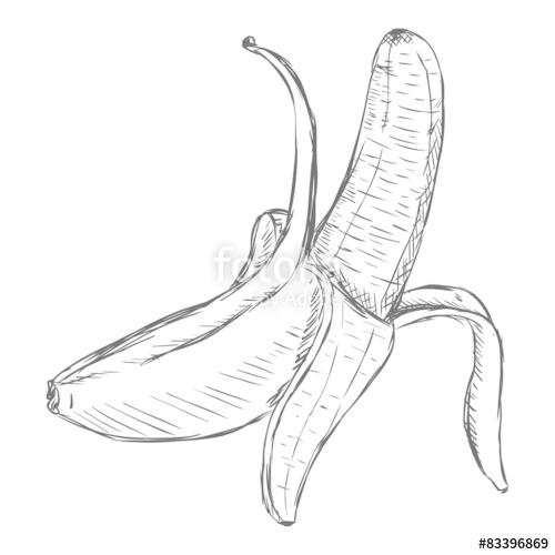 500x500 Vector Single Sketch Peeled Banana Stock Image And Royalty Free