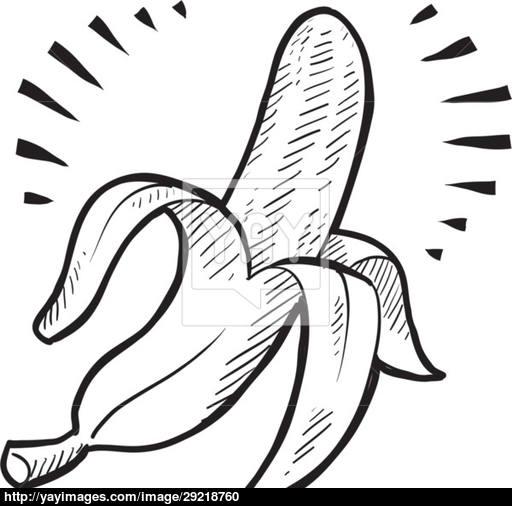 512x506 Banana Vector Sketch Vector