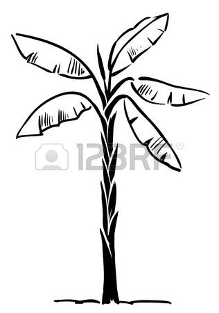 316x450 Banana Tree Clipart Black And White Collection