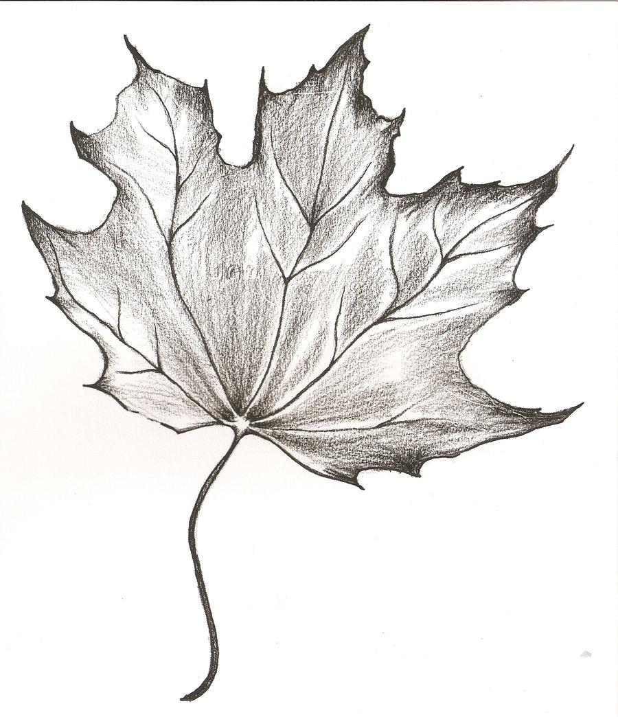 900x1044 Pencil Drawing Of A Leaf