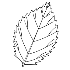 230x230 Top 20 Free Printable Leaf Coloring Pages Online