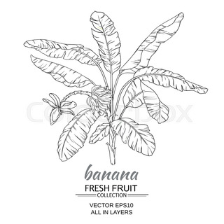 320x320 Banana Tree Stock Vector Colourbox