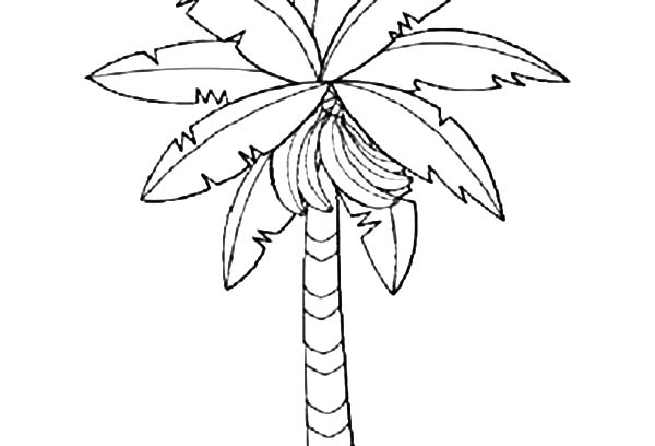 600x408 Banana Bunch On Banana Tree Coloring Pages