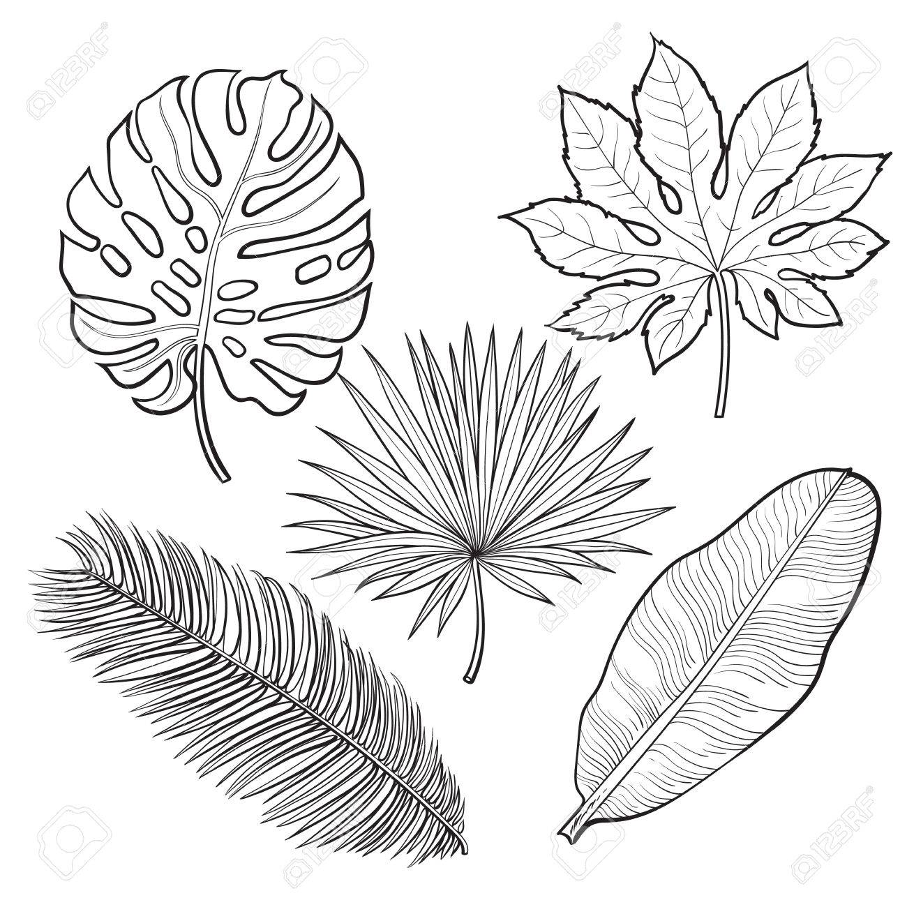 1300x1300 Set Of Tropical Palm Leaves, Sketch Style Vector Illustration