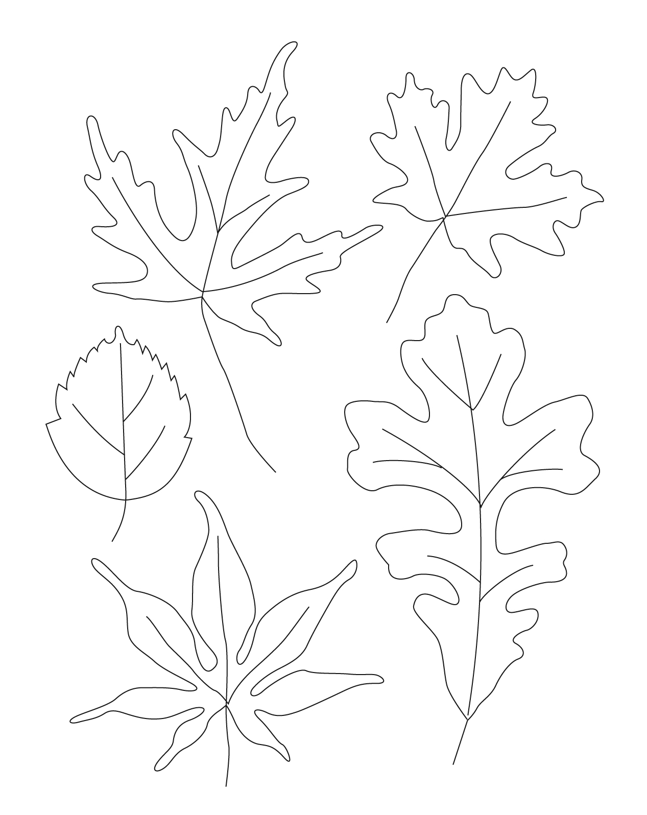 1267x1596 Contour Leaf Drawings