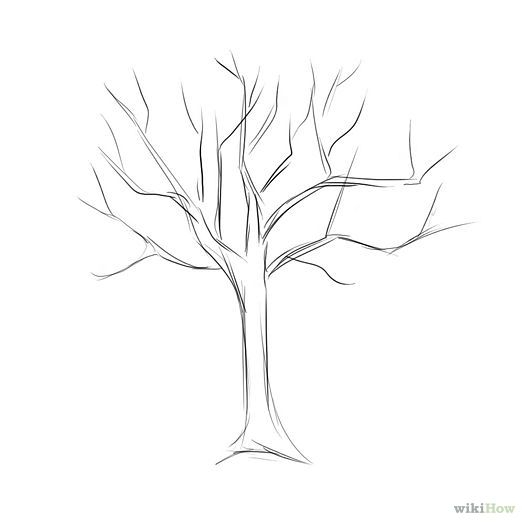 525x525 Easy Tree Drawings Home Designs Idea