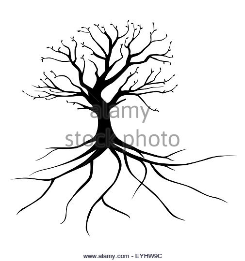505x540 Tree Drawing With Roots Stock Photos Amp Tree Drawing With Roots