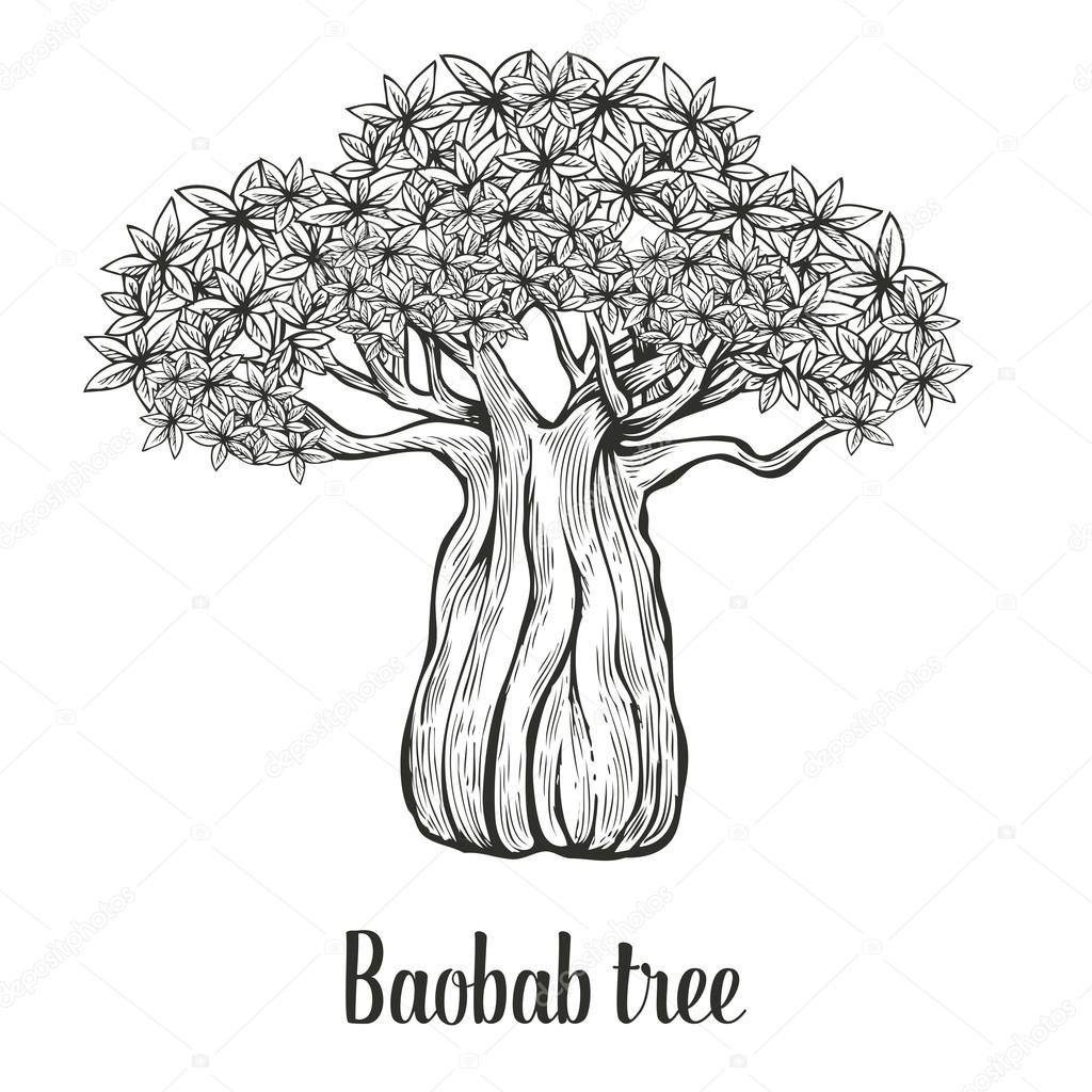 1024x1024 Baobab Tree, Leaf Engraving Vintage Hand Drawn Sketch Vector