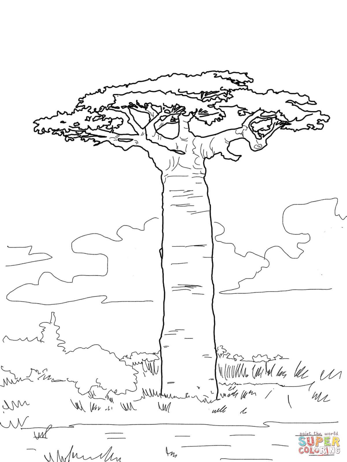 1200x1600 Grandidier's Baobab Coloring Page Free Printable Coloring Pages