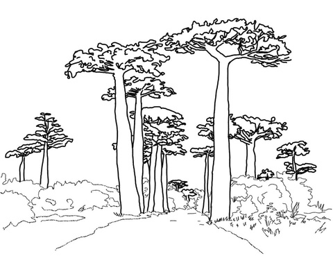 480x369 Avenue Of The Baobabs Coloring Page Free Printable Coloring Pages