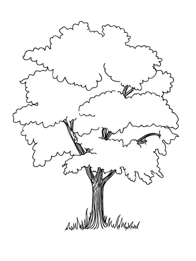 750x1000 Trees Coloring Pages. Download And Print Trees Coloring Pages