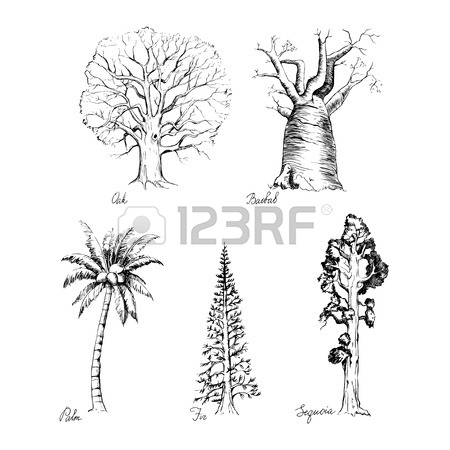 450x450 Vector Set Of Hand Drawing Style Of Graphic Trees For Design