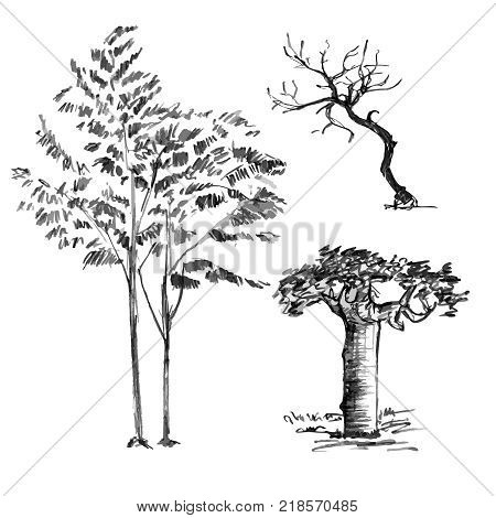 450x470 Baobab Images, Illustrations, Vectors