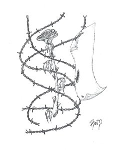 265x300 Barbed Wire Drawings