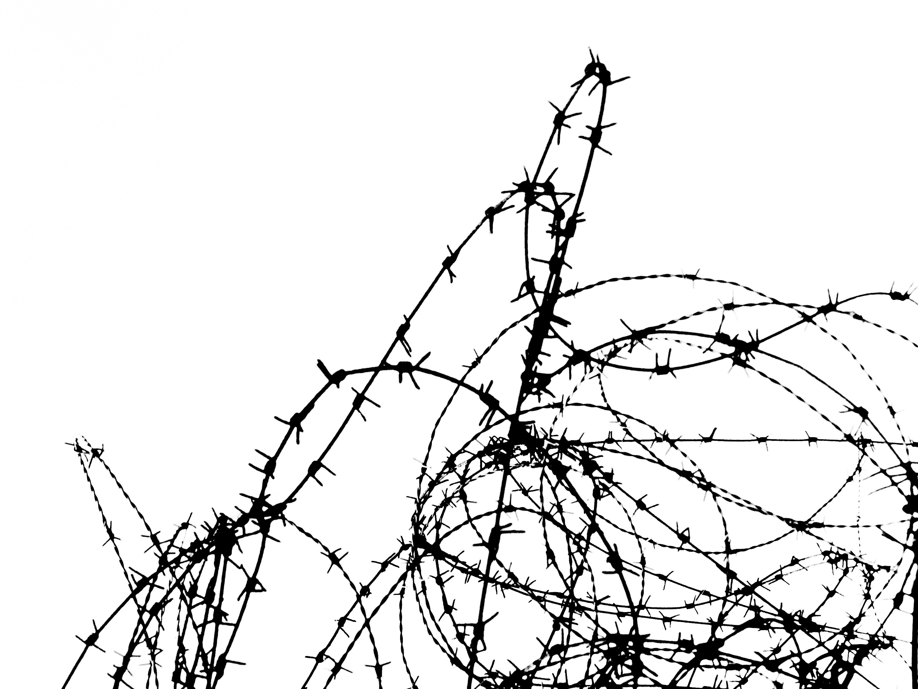 3072x2304 Free Images Branch, Black And White, Wire, Monochrome, Barbwire