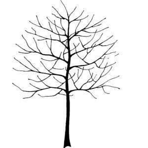 Bare Tree Drawing