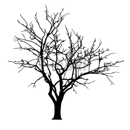 450x450 Bare Tree Stock Photos. Royalty Free Business Images