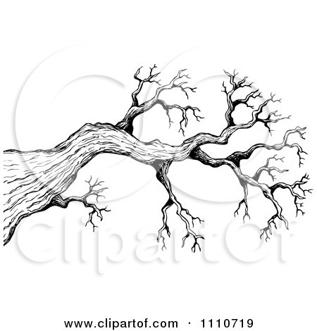 450x470 Clipart Black And White Sketched Bare Tree Branch