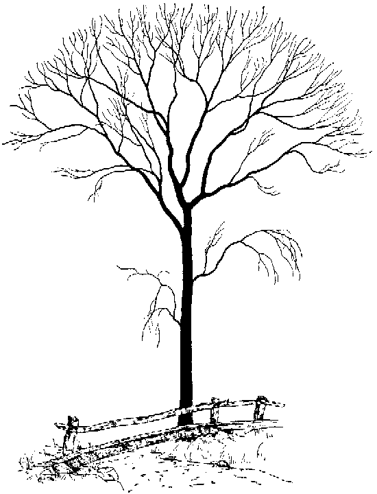 550x720 Bare Tree By Fence