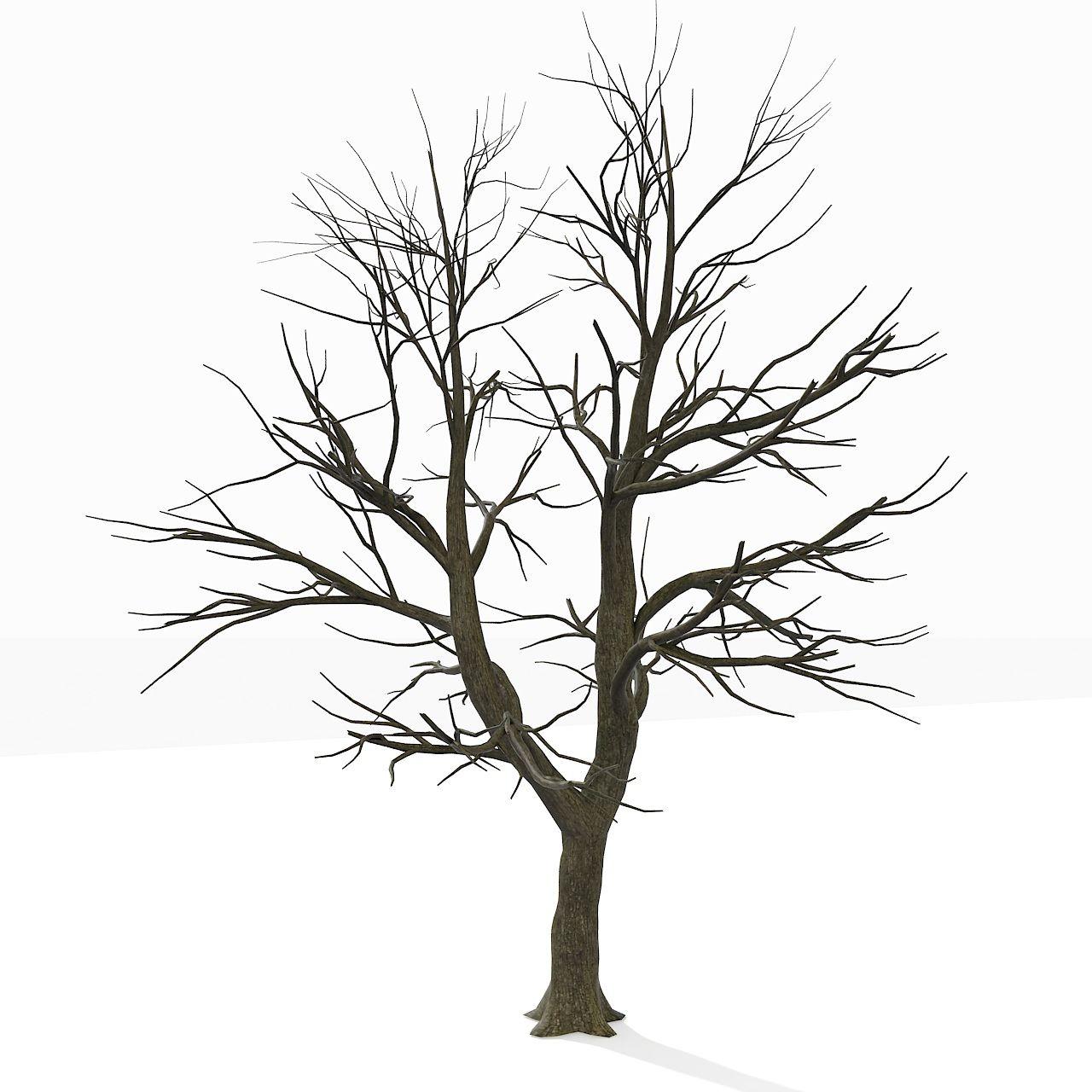 1280x1280 Bare Tree Coloring Page. Bare Tree Coloring Page Free Printable
