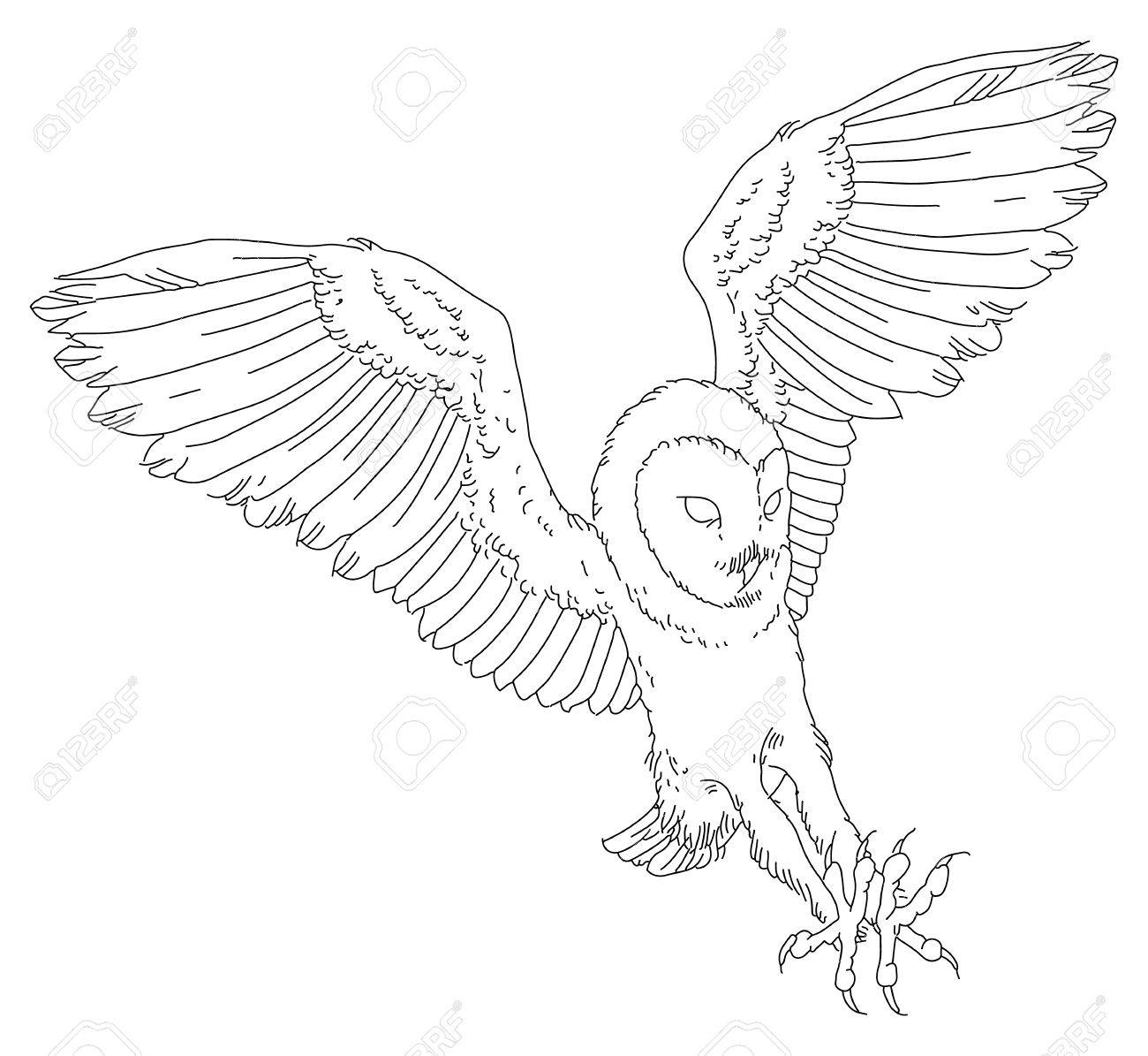 1300x1195 Barn Owl