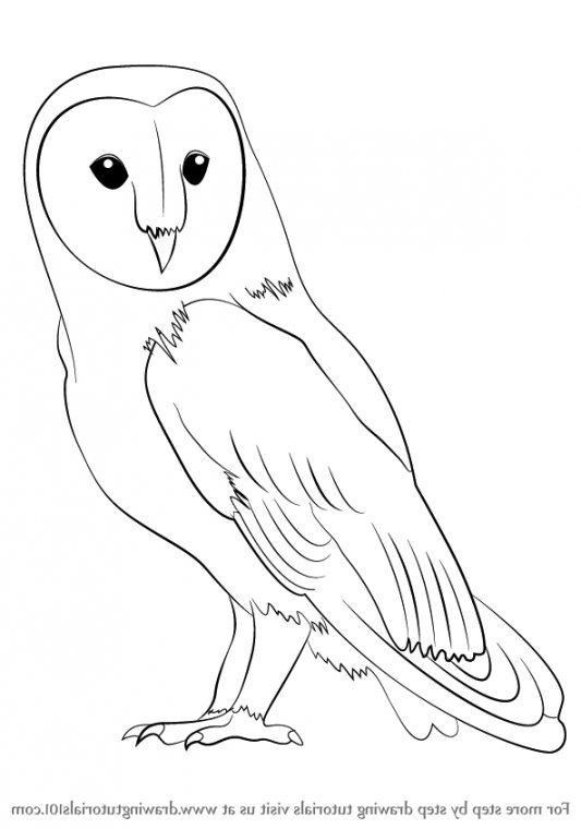 533x760 Barn Owl Drawings Therising.us