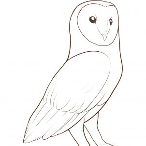 302x302 How To Draw A Barn Owl, Step By Step, Birds, Animals, Free Online