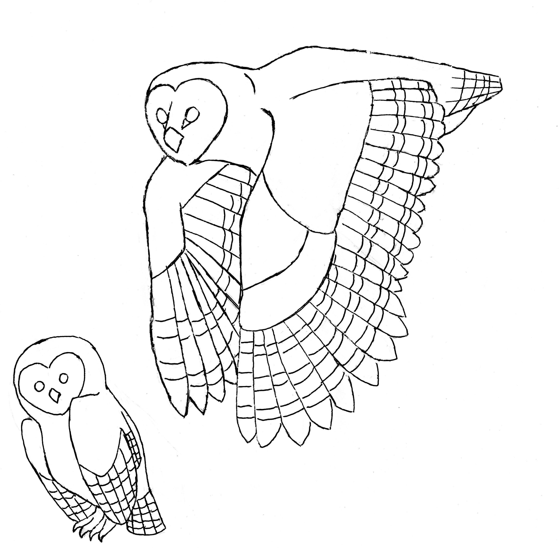 3000x2942 Barn Owls Corvus Tristis Science, Craft And An Odd Bird