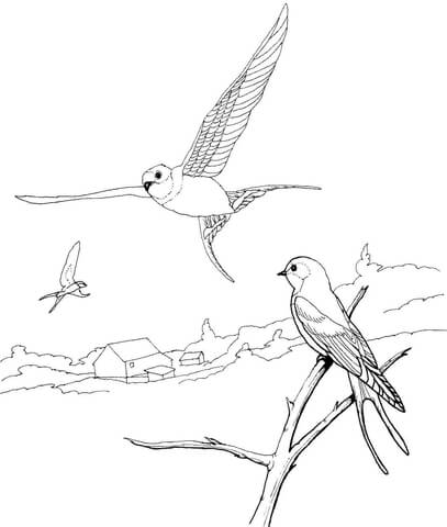 407x480 Barn Swallows Coloring Page Free Printable Coloring Pages