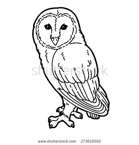 450x470 Barn Owl Coloring Page Animal Pages