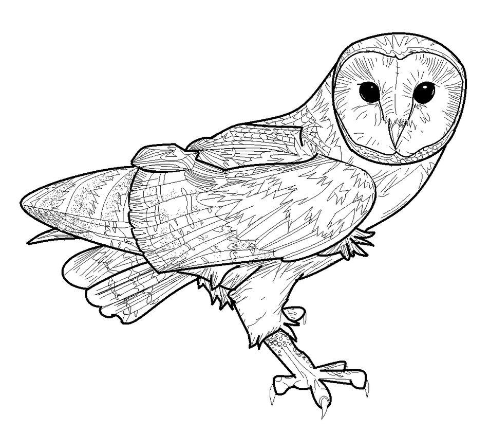 952x840 Barn Owl Lineart By Conkertsquirrel