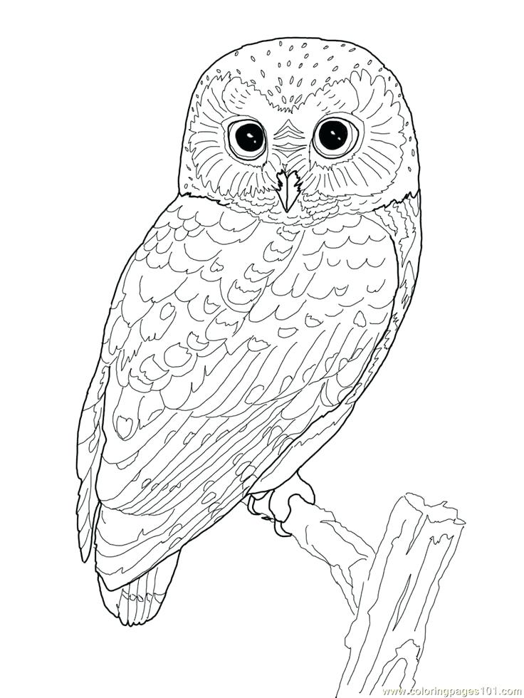 736x980 Barn Owl Coloring Page Detail For The Barn Owl Trust Barn Owl